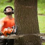 Sécurité, méthodes et autres sur l'abattage des arbres